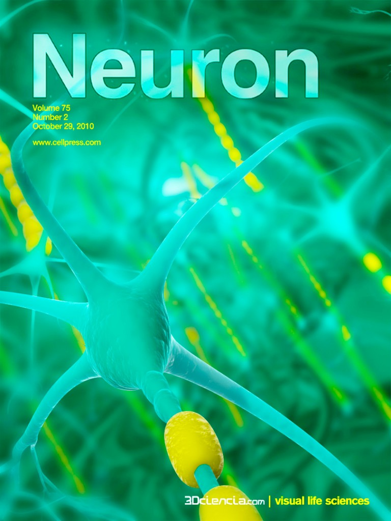 neuronas neurons network schwann cell cover bid axon myelin