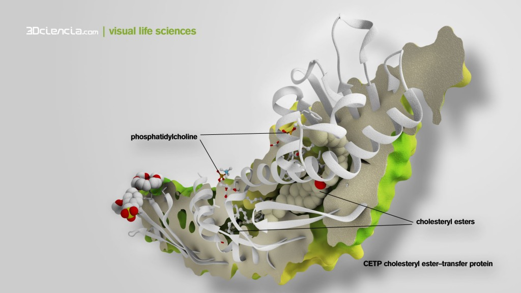 In clinical trials, CETP inhibitors increase HDL levels and reduce LDL levels, and therefore may be used as a potential treatment for atherosclerosis. The structure of CETP reveals a 60-A-log tunnel filled with two hydorphobic cholesteryl esters and plugged by an amphiphilic phosphatidylcholine at eatch end. The two tunnel openings are large enough to allow lipid access, which is aided by a flexible helix and possibly also by a mobile flap. The curvature of the concave surface of CETP matches the radius of curvature of HDL particles, and potential conformational changes may occur to accommodate larger lipoprotein particles. Point mutations blocking the middle of the tunnel abolish lipid-transfer activities, suggesting that neutral lipids pass through this continuous tunnel.