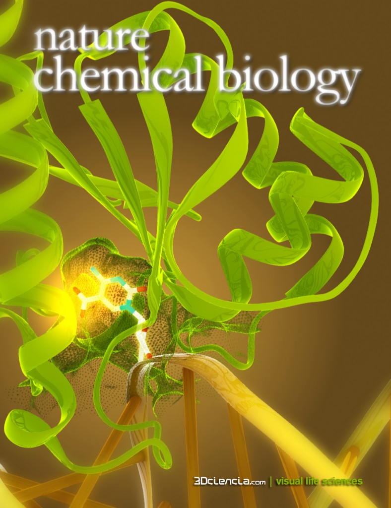 hTDG Thymine DNA glycosylase bound to 5 carboxylcytosine modified DNA ncb Nature Chemical Biology cover proposal