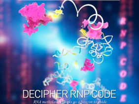 Nature proposal cover hnRNP decipher RNP code dph N6mA methyl adenosin RNA 3Dciencia