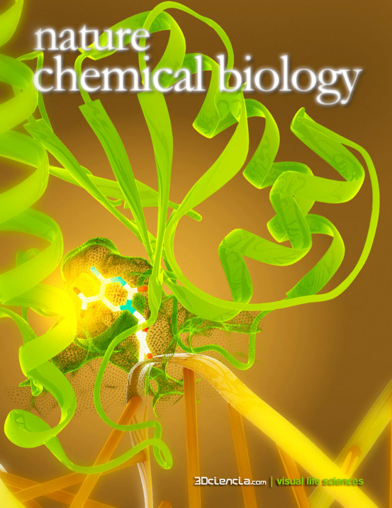 hTDG Thymine DNA glycosylase 5-carboxylcytosine modified DNA ncb nature chemical biology cover proposal 3dc